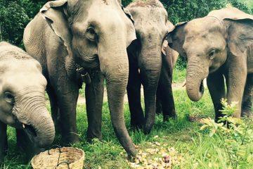 Some of the elephants Laura met